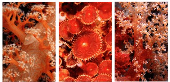 Living-coral-pantone-1-min